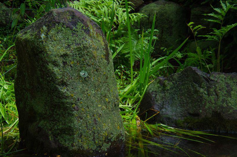 Lichens after rain-24