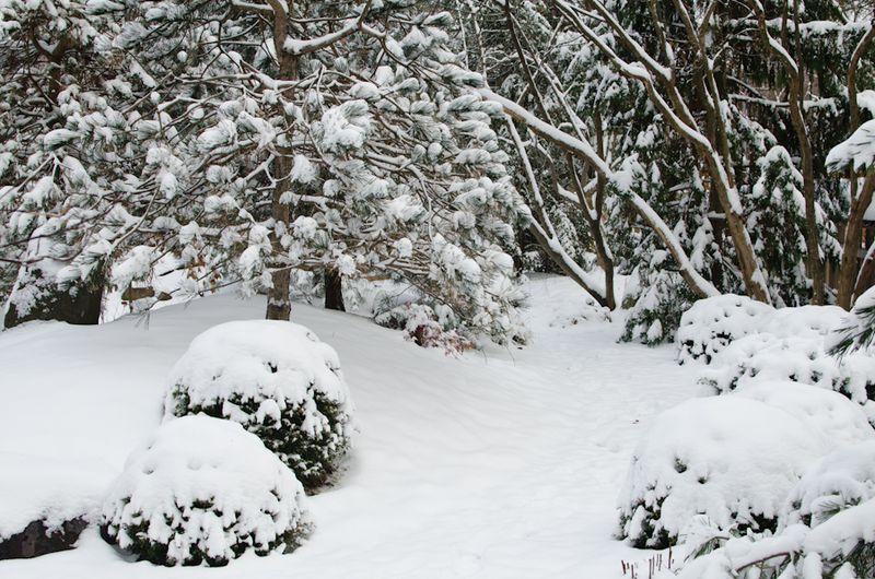 Snow 11-2104-15