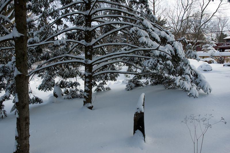 Winter Interest-4