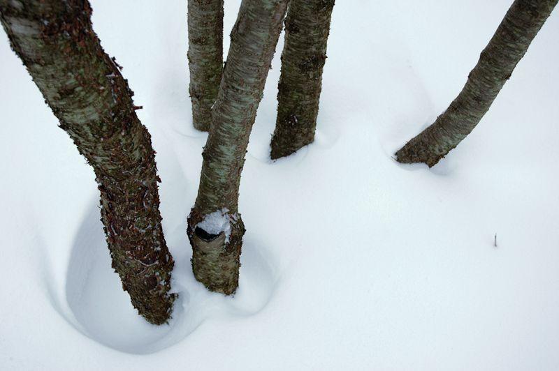 Winter Interest-11