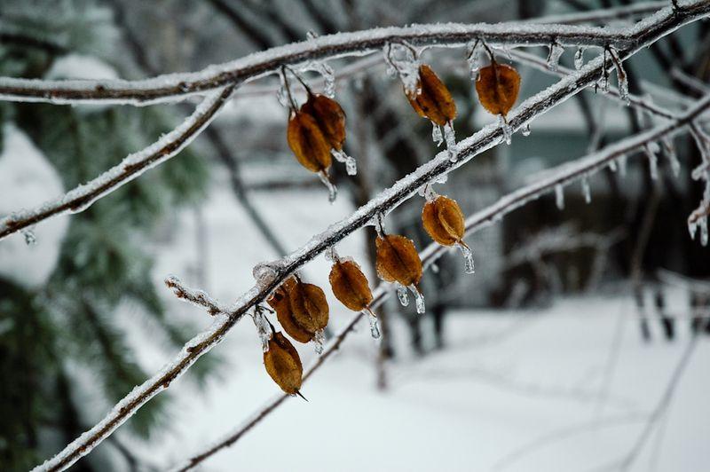 Winter Interest-15