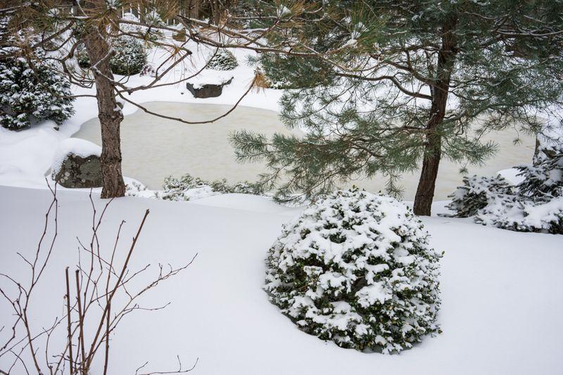 Dec Snow-17
