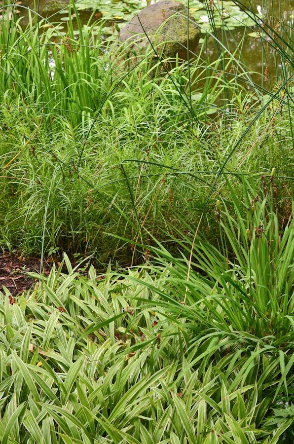 COR and Carex-5