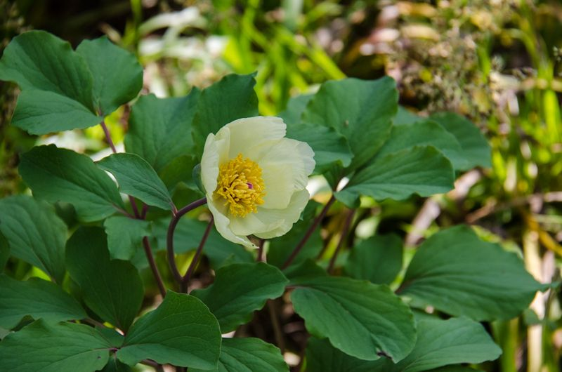 Flowers Spring 16-3