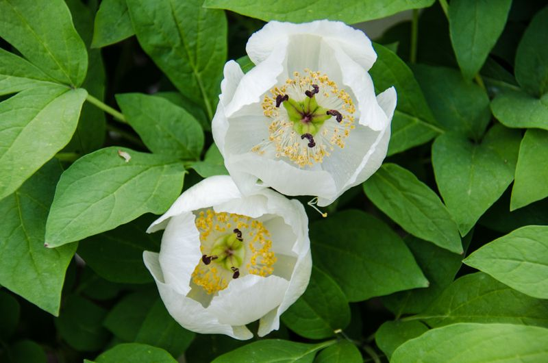 Flowers Spring 16-8