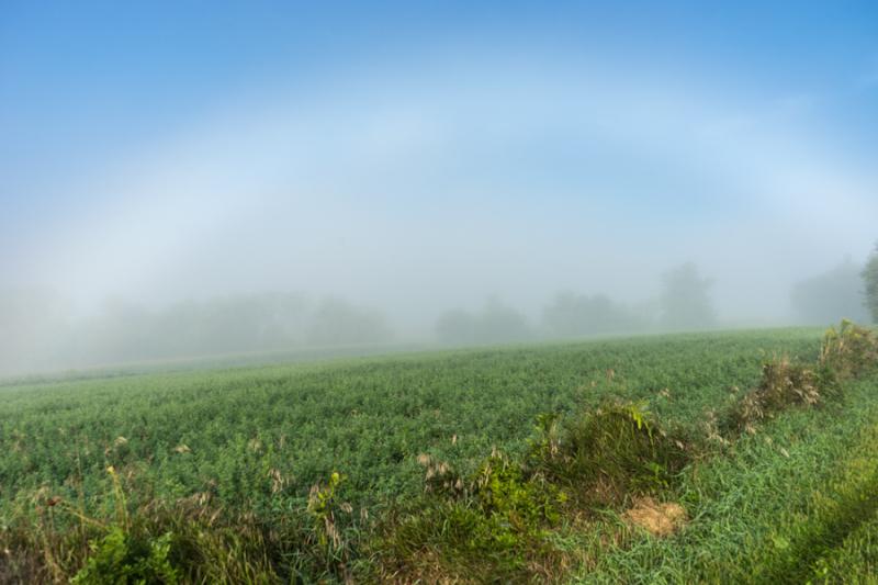 Foggy Morn-10