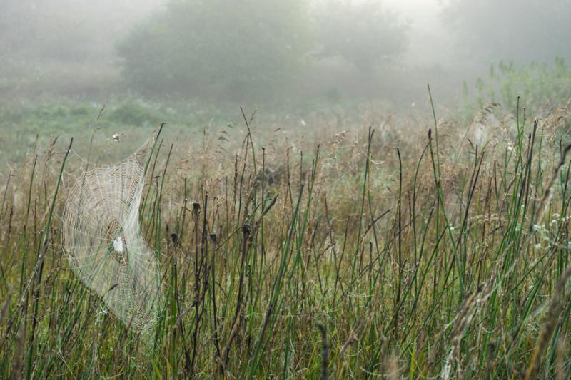 Foggy Morn-3