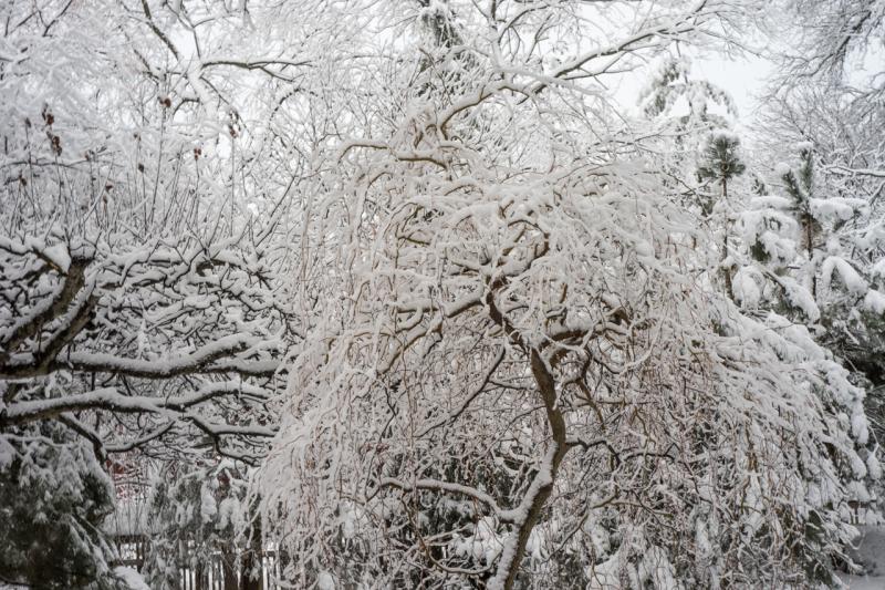 Snowfall-2