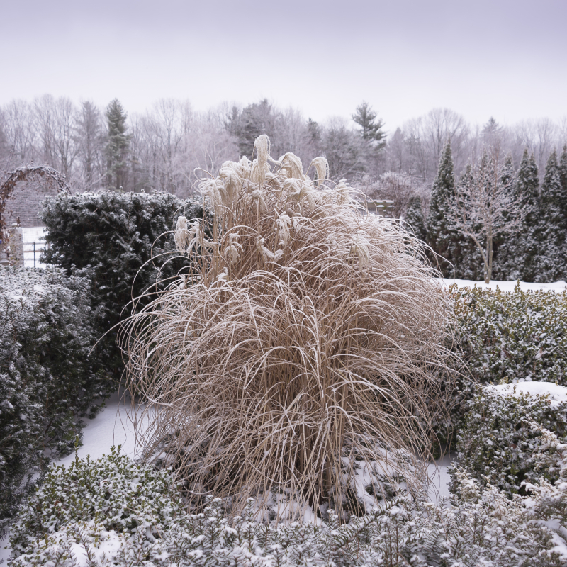 Juniper-hill-winter-garden-grasses-joseph-valentine-9