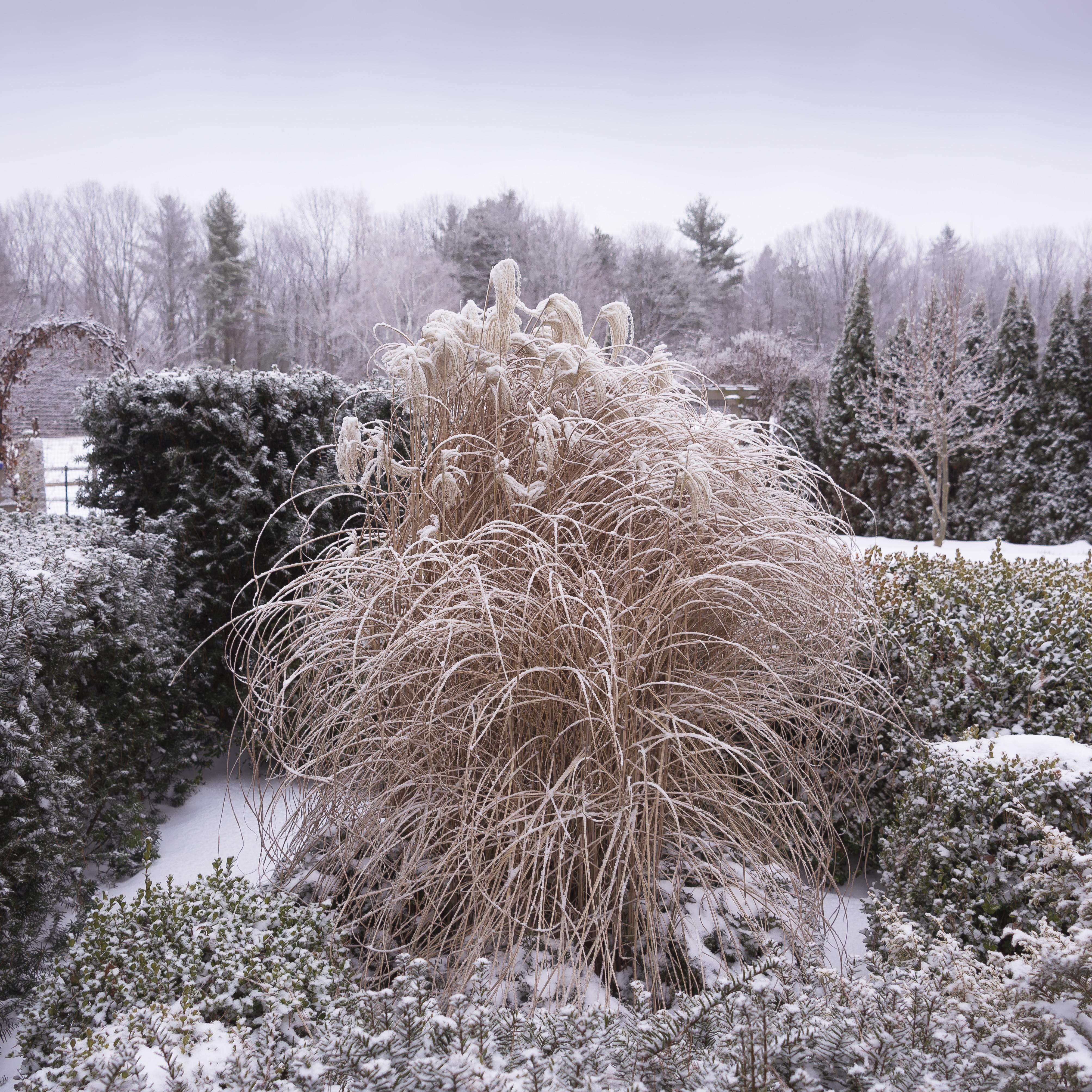 each little world winter garden inspiration