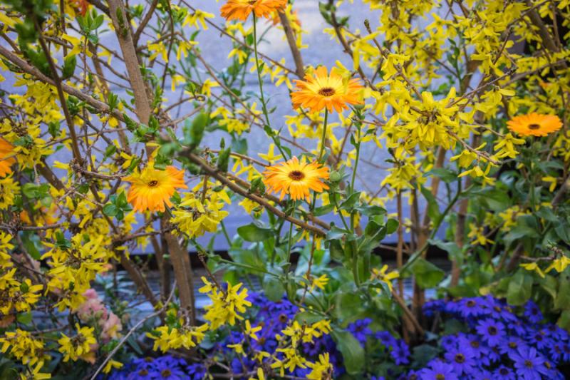 Flower Show-10
