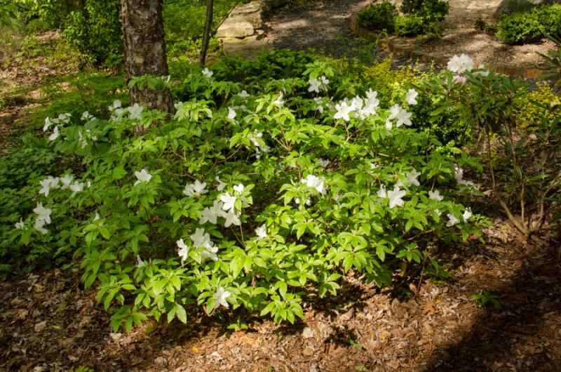 Spring Whites-9