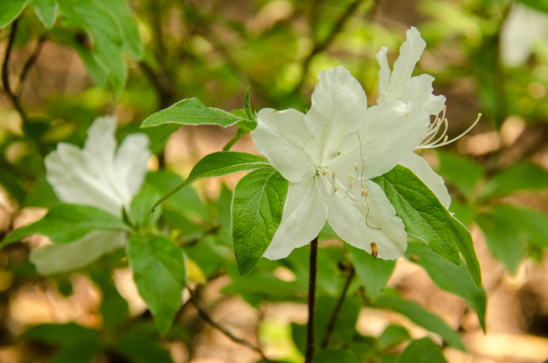 Spring Whites-10