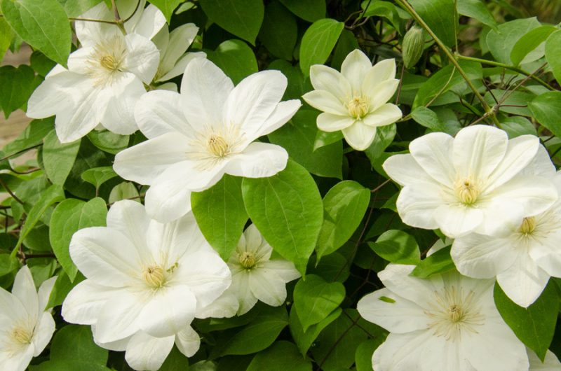 Spring Whites-31