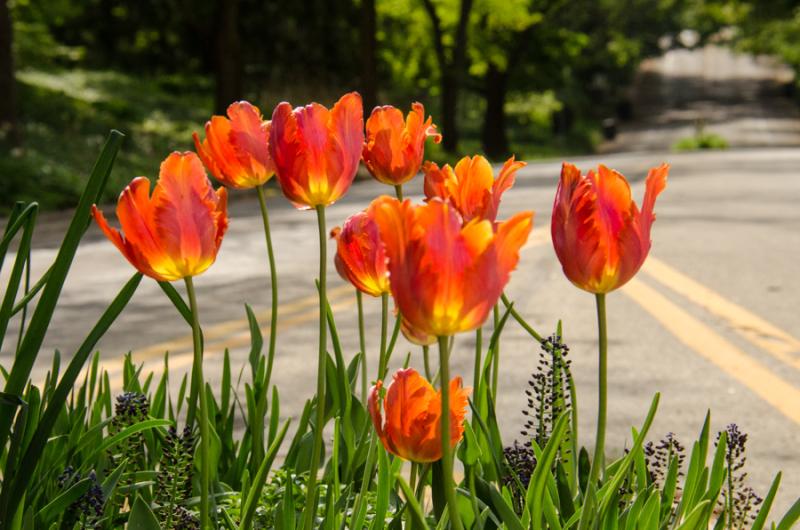 Spring Whites-3