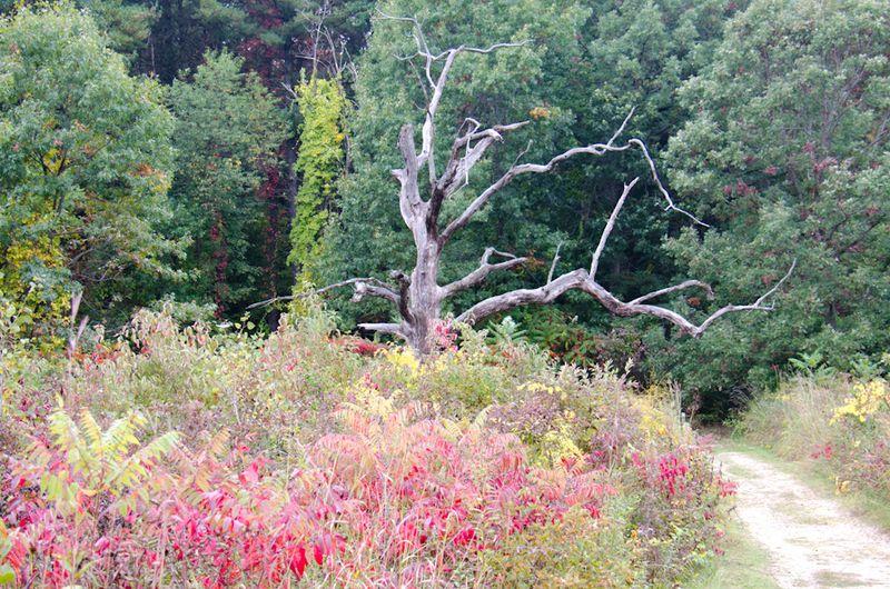Arboretum-7