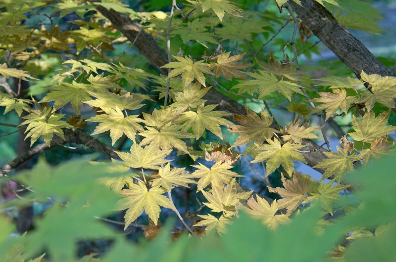 Fall Color 14-8