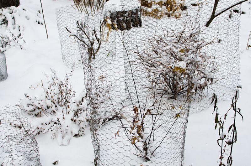 Snow 11-2104-3