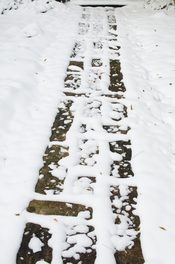 Snow 11-2104-12