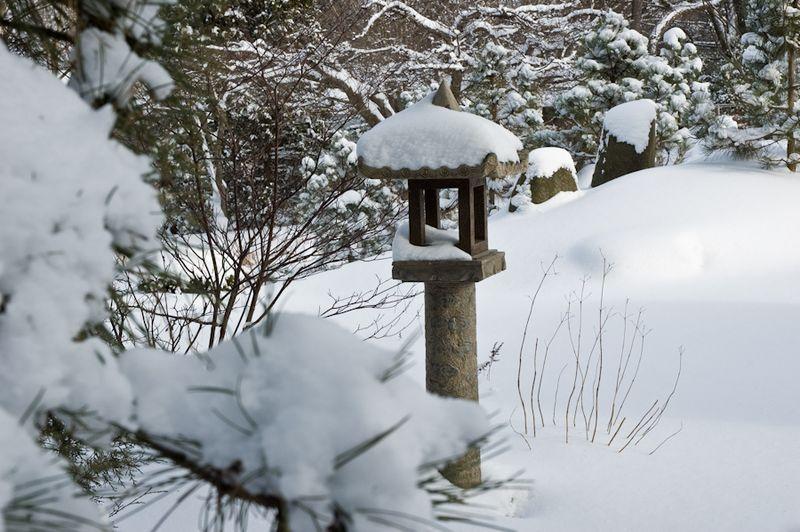 Winter Interest-2