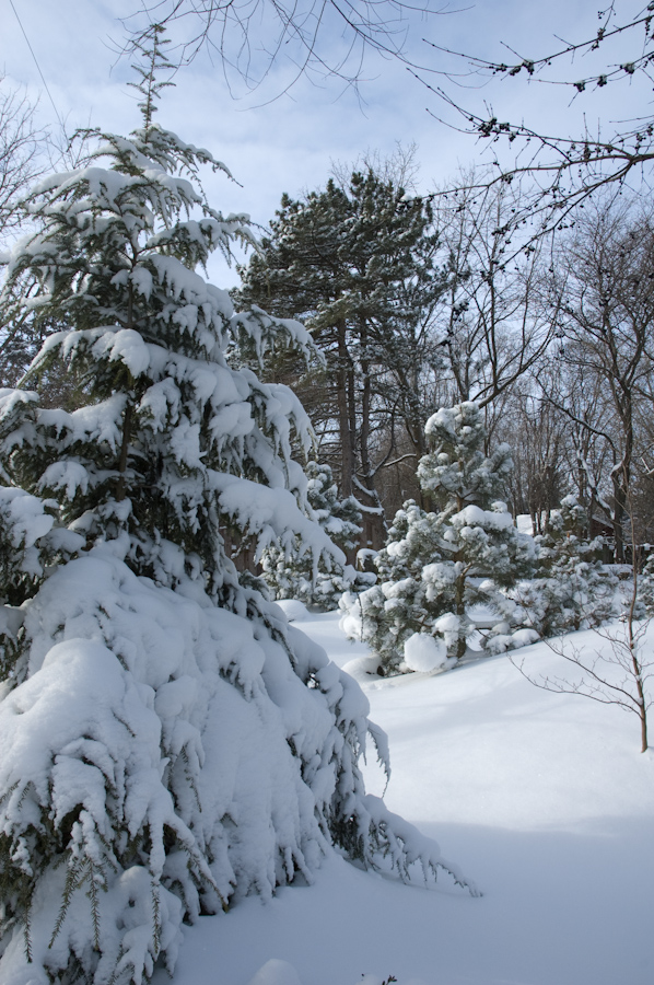 Winter Interest-3