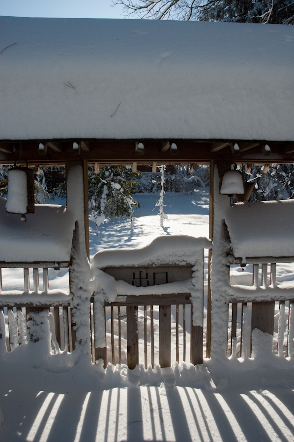 Winter Interest-7