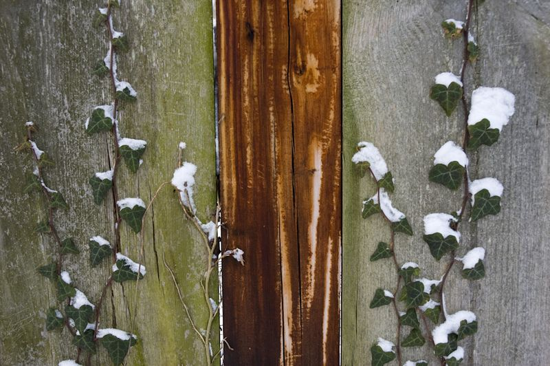 Winter Interest-12