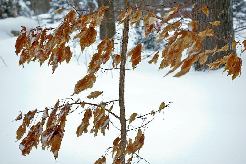 Winter Interest-14