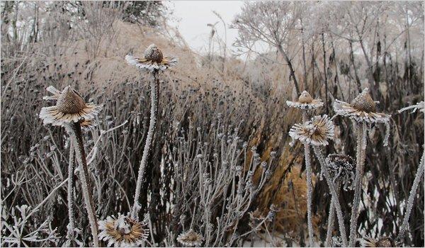 Winter-2-articleLarge