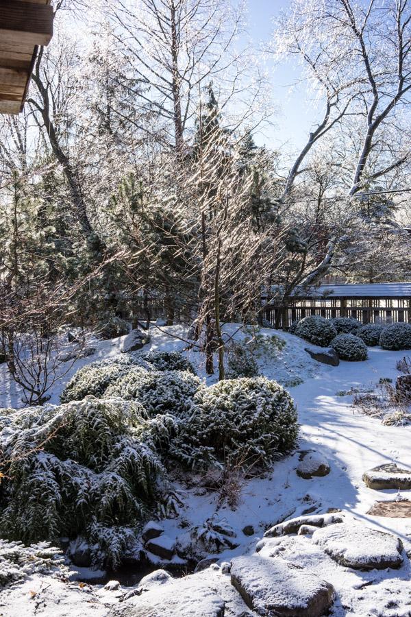 Ice Storm day 2-6