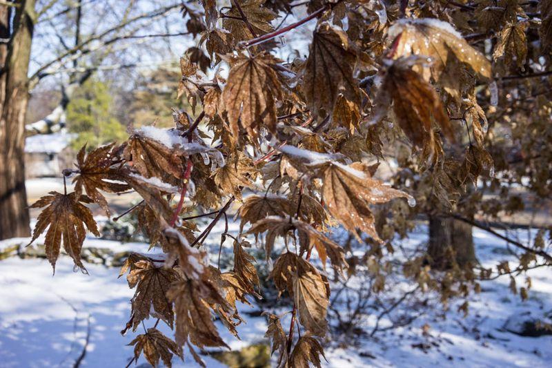 Ice Storm day 2-3