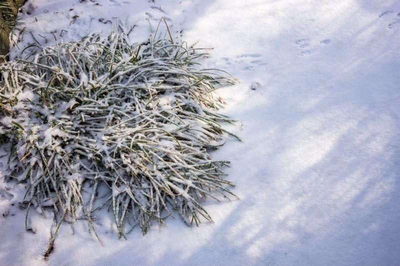 Ice Storm day 2-4