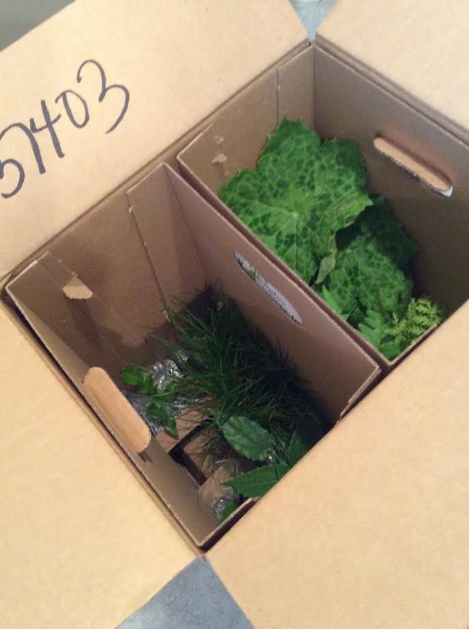 Each Little World Mail Order Plants Plant Delights Nursery