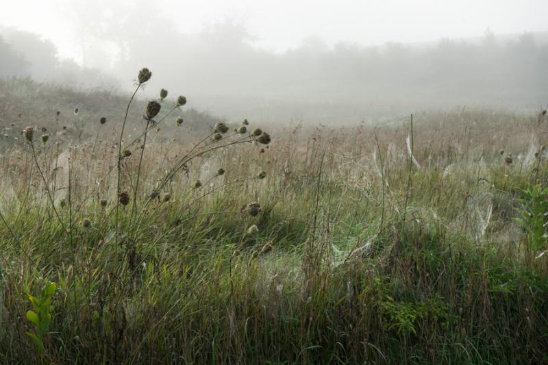 Foggy Morn-4