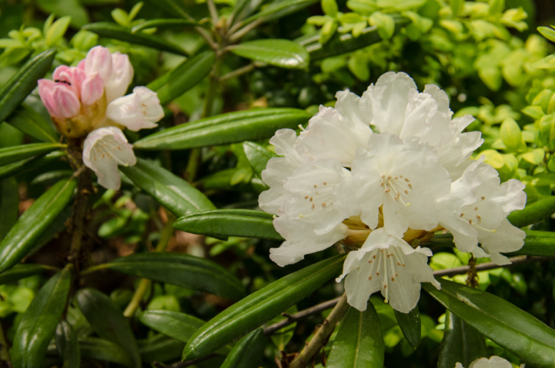 Spring Whites-13