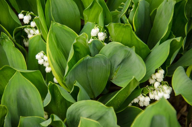 Spring Whites-17